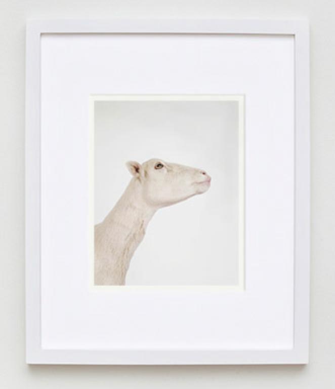 Animal Print Shop Schaf